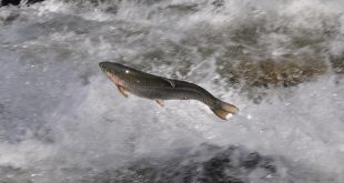 سیستم مداربسته پرورش ماهی قزل الا با بهترین شرایط