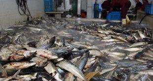 ماهی قزل آلا لرستان به عراق