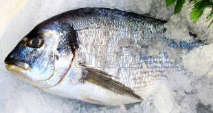 فروش عمده ماهی قزل آلا منجمد