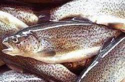 شرکت فروش ماهی قزل الا در سال 98