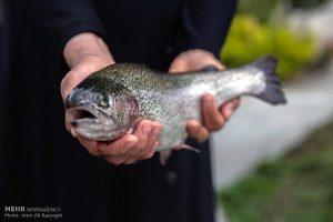 ماهی قزل آلا شهرکرد