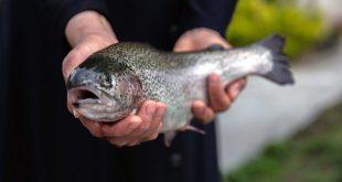 قیمت یک کیلو ماهی قزل آلا در بازار ایران