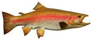قیمت بچه ماهی قزل الا 98 با بهترین نژاد