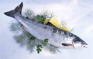 فروش ماهی قزل آلا شهرکرد