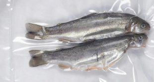 فروش ماهی قزل آلا منجمد بصورت بسته بندی و فله