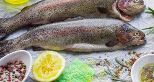 فروش عمده ماهی قزل آلا رنگین کمان شهرکرد