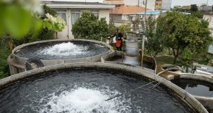 سیستم مدار بسته پرورش ماهی در مازندران
