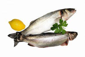 خرید عمده ماهی قزل آلا اصفهان