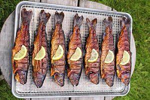 خرید ماهی قزل الا تازه در بازار