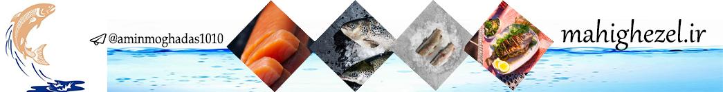 ماهی قزل