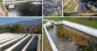 سیستم مدار بسته پرورش ماهی در یاسوج