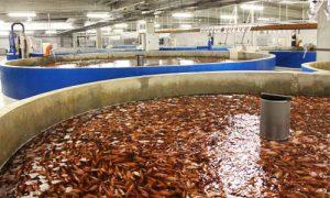 سیستم مدار بسته پرورش ماهی در لرستان