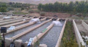 انواع سیستم مدار بسته پرورش ماهی در لرستان