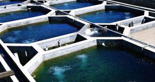 انواع سیستم مدار بسته پرورش ماهی در کرج