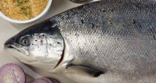 خرید ماهی قزل آلا تازه در تهران