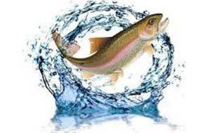 خرید عمده ماهی قزل آلا تازه در تبریز