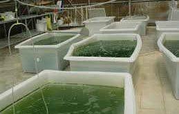هزینه پرورش ماهی قزل آلا در سیستم مدار بسته