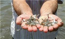 فروش بچه ماهی قزل آلا با اوزان مختلف
