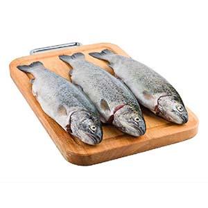 فروش ماهی قزل آلا در هشتگرد