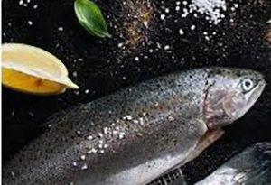 قیمت روز ماهی قزل آلا سایز کوچک در بازار