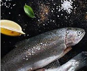 خرید ماهی قزل آلا تازه از تولید کننده