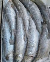 قیمت ماهی قزل آلا بسته بندی در تهران