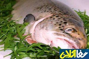 فروش ماهی قزل آلا تازه با قیمت امروز