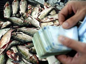 فروش ماهی سالمون در تهران