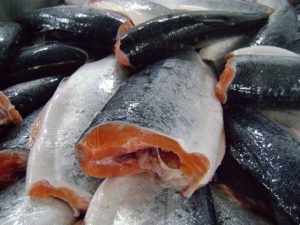 خرید ماهی قزل سالمون به قیمت امروز